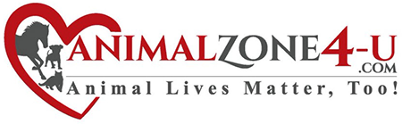 Animal Zone 4 You